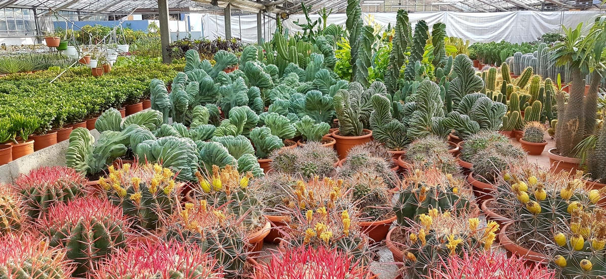 Vivaio di piante grasse succulente & Cactacee